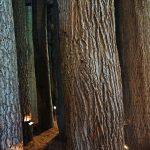 Durch den Wald in die Ausstellung